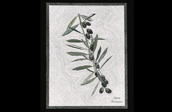 deferranti-micro-mosaics-flowers-of-jordan-olive