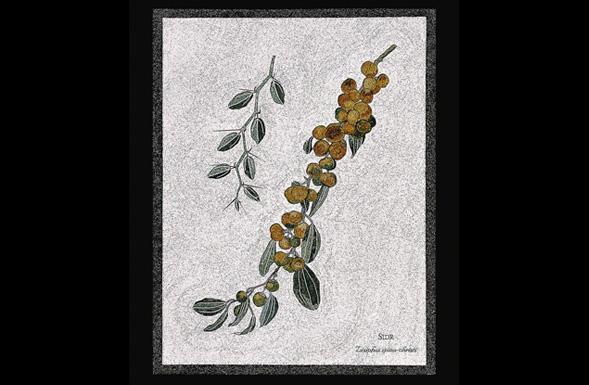 deferranti-micro-mosaics-flowers-of-jordan-sidr