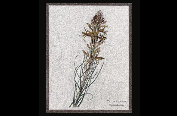 deferranti-micro-mosaics-flowers-of-jordan-yellow-asphodel